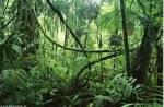 ((unli))((big))((green))Regeln!((egreen))((ebig))((eunli)) ((unli))((olive))Anmeldung((eolive))((eunli)) • ((bold))Benutzt die Steckbriefvorlage!((e