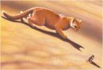 Fakt 14: Sandsturm war bei ihrer Kriegerprüfung so aufgeregt, dass sie sogar schummelte und ein Stück Beute stahl.