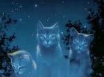 Hier beginnt für euch die Fanfiction: Mondlicht erfüllte eine kleine Lichtung eines Tannenwaldes. Eine sanfte Brise erfrischte die warme Nacht der B