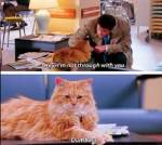 Welche Haustiere hättest Du gerne?
