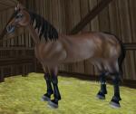 Nun wird es wieder etwas kniffliger: Wie viele Farbvarianten von dem American Quarter Horse gibt es?