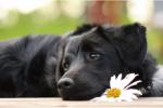 Survivor Dogs- Der Ruf der Wildnis- Rpg