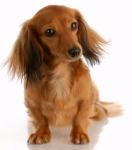 ((bold))Rudelregeln:((ebold)) 1. Gehorche Hunden die einen höheren Rang haben als du! 2. Töte einen Hund nur wenn er dein Leben oder das eines Rudel