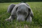 ((bold))Wer mal wieder on kommen sollte:((ebold)) Es gibt leider ziemlich viele Hunde, die schleunigst wieder kommen sollten, das sind: ((red))((bold)