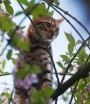 Willkommen ist Fantastic World! Fantastic Was? Reformabit-Clan? Was ist das? Also, dies ist ein Warrior Cats RPG. Es gibt einen Clan, den ReformabitCl