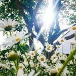 Vor langer, langer Zeit, als die Erde noch eine Scheibe war, begann unsere Geschichte... Es ist ein wolkenloser, sonniger Tag, die Blumen blühen und