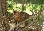 Katzen im Wald - Katzen des NebelClans
