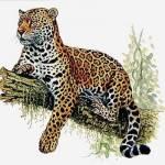Sei gegrüßt, mein Name ist Leopardenblüte. Am besten stelle ich mich einmal vor, damit du weißt wer da vor dir steht... Name: Leopardenblüte Alte