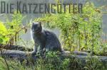 Die Bräuche des Clans Wenn eine Katze mit Fähigkeiten stirbt, wird sie zum Katzengott. Ende jeden Mondes opfern die Clankatzen einem Gott etwas, das