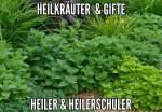 ((big))((green))Heilkräuter((egreen))((ebig)) Ampfer Die Blätter vom Ampfer werden zu einem Brei zerkaut und dann zur Behandlung von Wunden eingeset