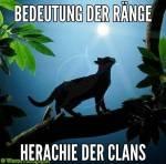 ((big))Ränge ((ebig)) Junges - Ein Katzenkind, das jünger ist als sechs Monde. Schüler - Eine Katze, die mindestens sechs Monde alt ist und trainie