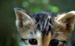 Führer: Schattenwald-riesiger, pechschwarzer Kater mit weißer Schwanzspitze und kalten, eisblauen Augen Hohe Krieger: Beerenstrauch-hübscher hellbr