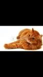 Warrior Cats Bilder