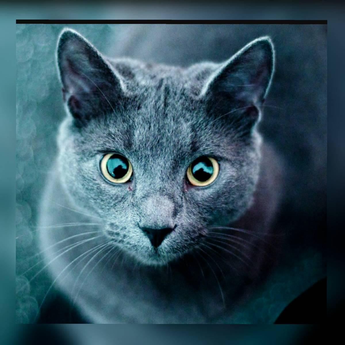 Warrior Cats Braunstern