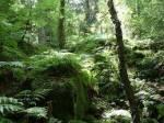 Territorium: Wir leben in einem grünen Laubwald, mit vielen Bäumen, Farnen und Bächen. Links des Territoriums befindet sich eine Schlucht - von der