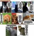 Life of Tapsi-Das Tagebuch einer Katze