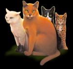 Warrior Cats Charakter raten! (einfach)