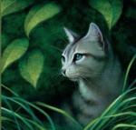((bold))((unli))((big))((maroon)) Die Streunerbande:((emaroon))((ebold))((eunli))((ebig)) ((unli))Die Katzen:((eunli)) Hier haben sich alle möglichen