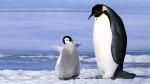 Wo leben Pinguine Süden der Erde oder im Norden?