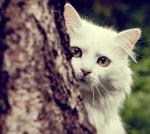 Warrior Cats- Dunkle Zeiten- Rpg
