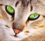 ((unli))((big))Wer spielt wen? ((ebig))((eunli)) ((bold))Lavendelblüte:((ebold)) Flammenblitz Efeumond Schimmerstern Tau ((bold))Tiger:((ebold)) Tige