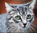 ((big))((unli))Das Gesetz der Katzen:((eunli))((ebig)) ((bold))1.((ebold)) Du darfst in jedem Rang einen Gefährten und Junge haben, solange du deiner