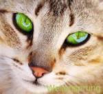 ((big))((green))((bold))Wellensprung ((ebold))((ebig))((egreen)) Alter: 17 Monde Geschlecht: Männlich Rang: Krieger Aussehen: hellbraun-getigerter Ka