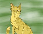 Bilder zu Warrior Cats - Borderline