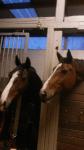 Wie würde der Stall aussehen auf dem du dein Pferd halten würdest?