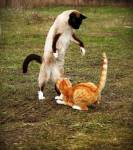 WolkenClan Katzen können 5 - 6 Katzenbeinlängen hoch springen. (zwischen 1,50 m und 1,80 m)