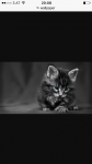 Die Katze ist süß, oder?