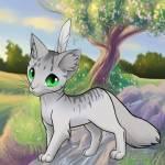 ((blue))Blütenfeder((eblue)) Diese Katze stammt von Silberblüe leider geht es nicht Federn ins Fell zu machen tut mir leid Name: Blütenfedee Geschl
