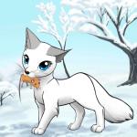 ((teal))Federfrost((eteal)) Federfrost wurde sich von Wacholderschweif gewünscht Name: Federfrost Aussehen: weiß mit grauen Pfoten und Ohren und lei