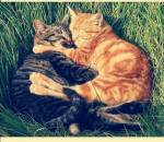 ((big))((bold))((red))Die Gefühle der Katzen((ebig))((ered))((ebold)) Name-Name(Mentor und Schüler) Name&Name(Geschwister) Name*Name(Gefährten) Nam