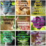 Warrior Cats-Die Geschichte des MondClans