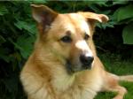 Diese verspielte Kriegerin wird ebenfalls von surivor dog gespielt. ((fuchsia))Blue((efuchsia)) ist der Name der hübschen Chinook - Hündin.