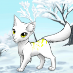 Bilderliste Warrior Cats