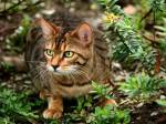 ((blue)) Vanillestern Name der Katze: Vanillenstern Aussehen: gold-braune Kätzin mit weißen Augen (Blind), dünn, ist für eine Windclankatze sehr g