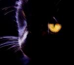 ((big)) ((bold)) INFOS & NEWS ((ebold)) ((ebig)) Wer spielt wen? Sonnenuntergang (ich): Kaltbirkenschweif, Nachtwolfseele, Eschenzweigpfote Alphawölf