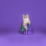 Endungen von Warrior cats