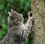 Warrior Cats- Welcher Name ist für dich bestimmt?