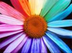 Welche Farben magst du am liebsten?💛❤💜💙💚