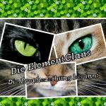 Die ElementClans-Die Prophezeihung beginnt