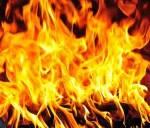 ((bold))Der FeuerClan - FF Territorium: Ein sehr trockener Wald, in dem es schnell zu Bränden führen kann Nahrung: Oft nur Mäuse und tote Vögel Di