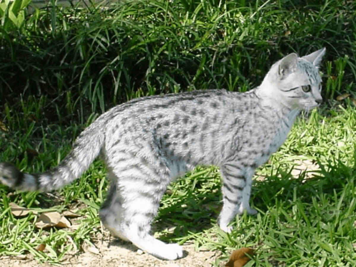 Teste Dich Warrior Cats Story