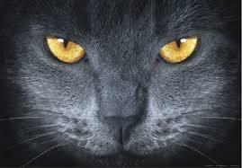 welcher warrior cats charakter bist du. Black Bedroom Furniture Sets. Home Design Ideas