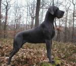 ((big))biggie sams hund(Samo)((ebig)) (ist das Bild okey oder andere fellfarbe?)