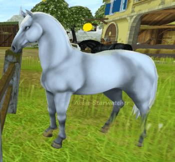 Welche StarStable Pferderasse passt zu dir?