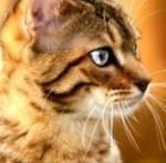 Wartior cats-dein Name