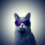 Lustige Warrior Cats Namen